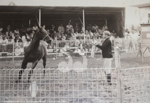 Betty Shepherd showing a horse at the Scone yearling sales.