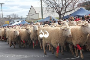 Festival of the Fleeces @ Merriwa | New South Wales | Australia