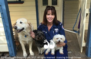 Melinda Jenkins with her own fur family Hollie, Dash, Didee and Andie the hiding Jack Russell.