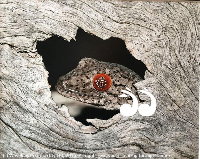 "Winner of animals wildlife category, ""Peek a Boo"", by Brett Touzell."