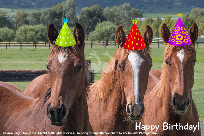 Horses Birthday Explained