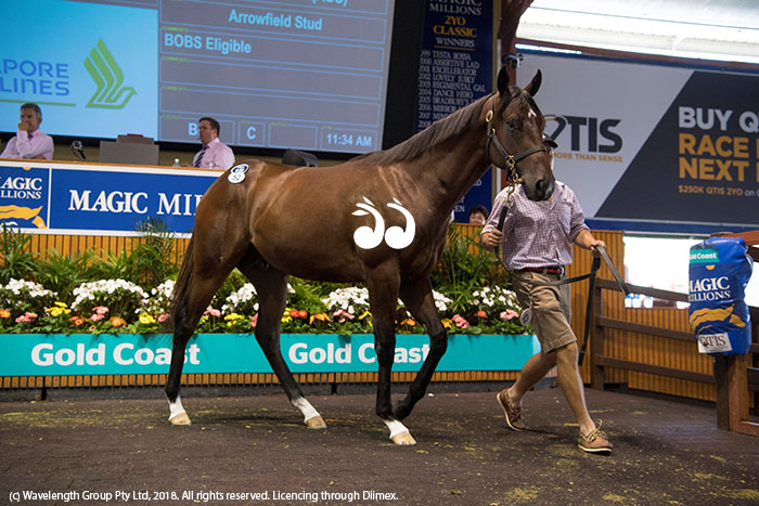 Lot 52 a colt by Fastnet Rock and Risk Aversion was purchased by Coolmore for $1,000,000.