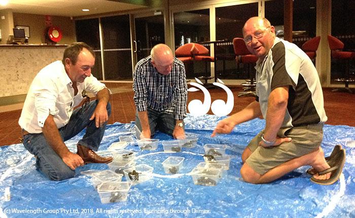 Wrangling yabbies: Robert Kelaher, Colin Watts and Joel Wilkinson.