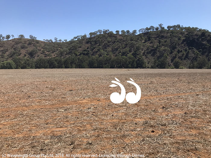 A paddock on Richard Bell's property which fronts onto the Hunter River, but probably won't be able to be irrigated due to the new restrictions.