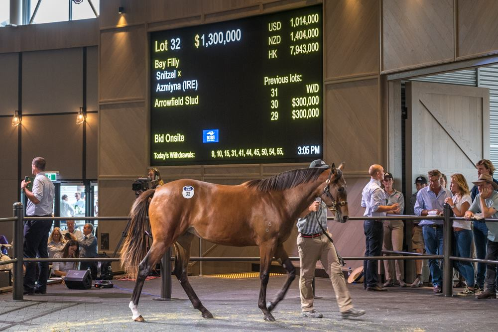 The Arrowfield colt by Snitzel and Azmiyna sold for $1.3 million.