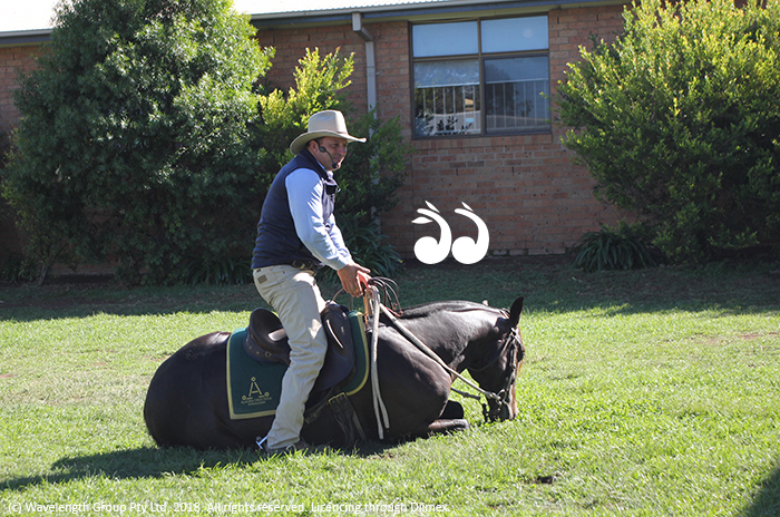 Guy McLean, horseman, performing at St Mary's Primary School on Thursday.