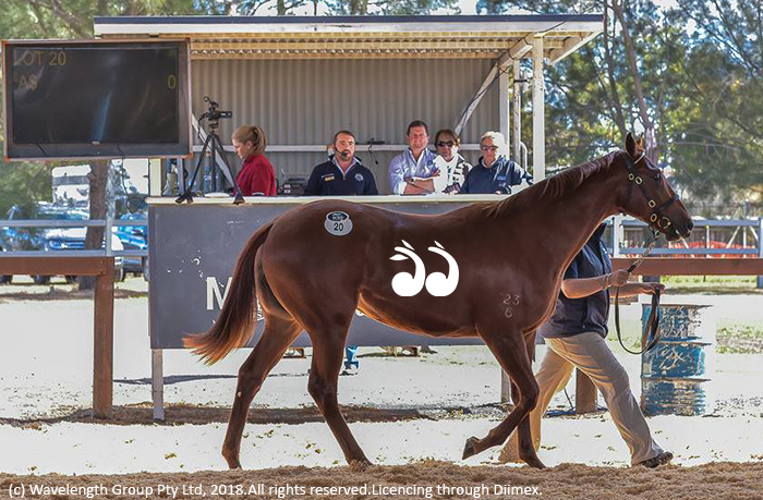 A filly by Wandjina sold for $110,000. Photo by Joan Faras.