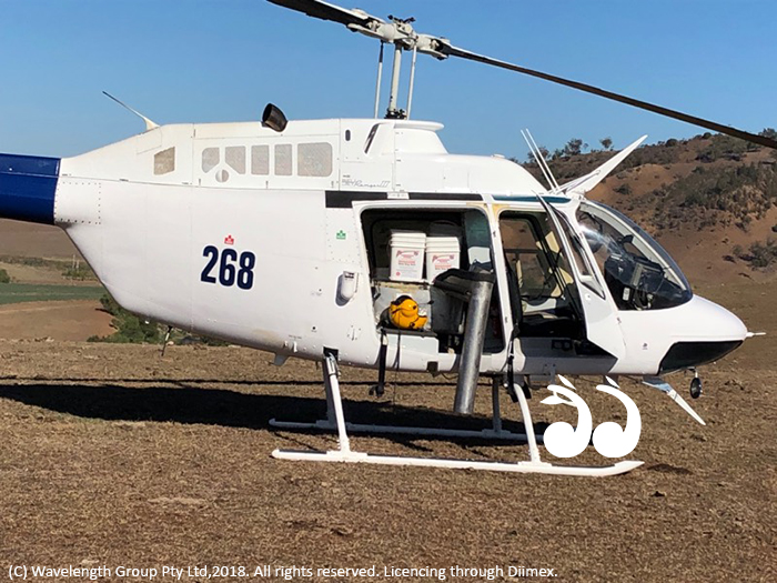 Aerial and ground baiting programs are underway for wild dog control across the Hunter.