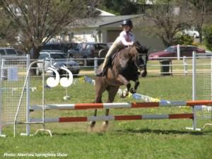 Merriwa Springtime Show - Sunday @ Merriwa Showground | Merriwa | New South Wales | Australia