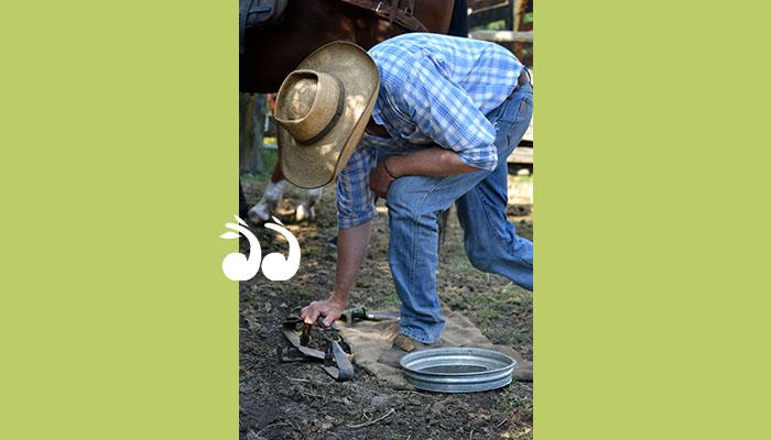 Setting a wild dog trap. Photo: Hunter Local Land Services.