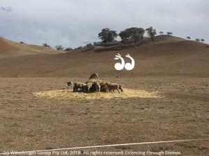 CWA - Drought Relief @ Scone RSL Club | Scone | New South Wales | Australia
