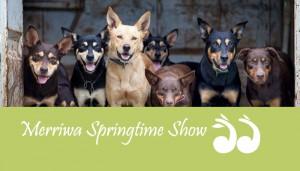 Merriwa Springtime Show @ Merriwa Showground