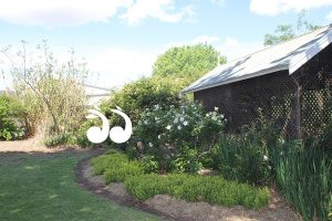 ADFAS Garden Discoveries @ Scone Arts and Crafts